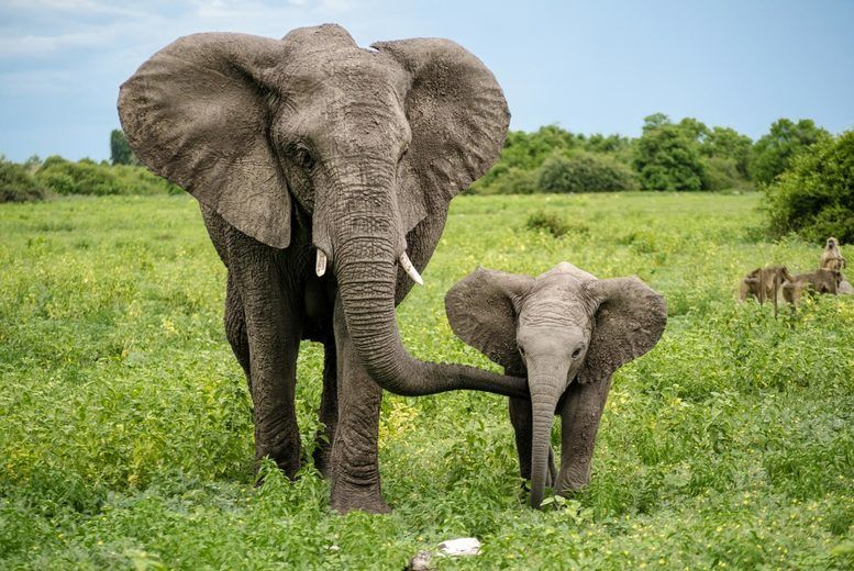 Born Free Elephant Adoption | Birmingham | Wowcher
