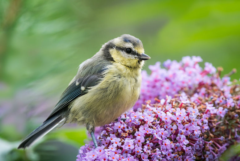 Bird in Garden, Stock Image