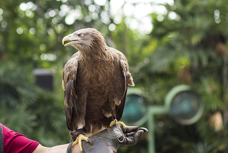 2hr Falconry Experience