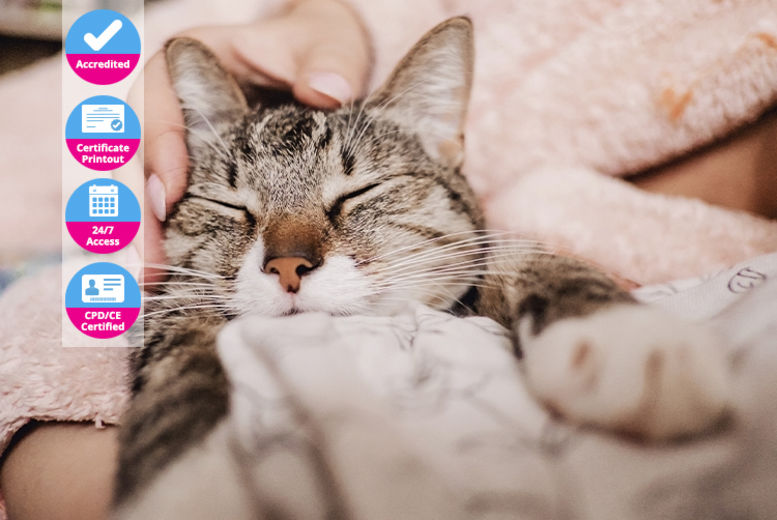 Essential Cat & Kitten Care – Online Course - ICOES Accredited
