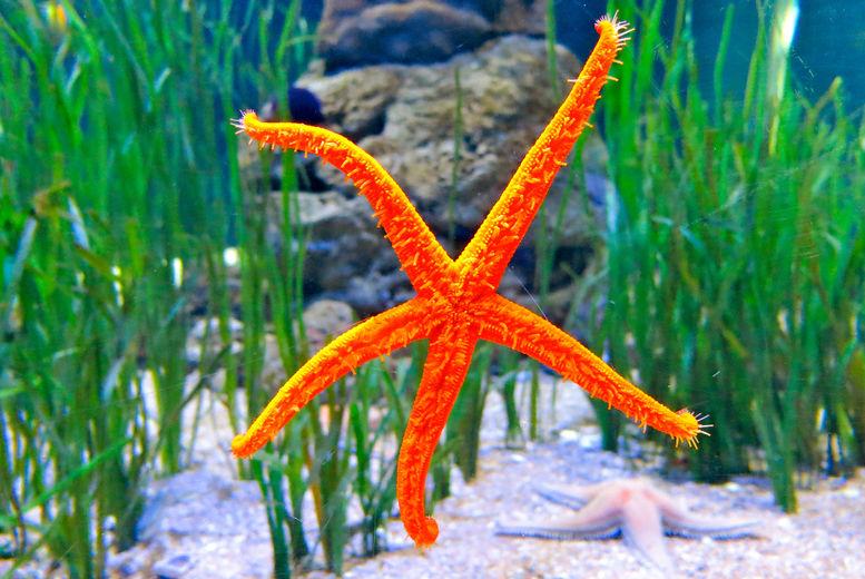 Bristol Aquarium Stock Image