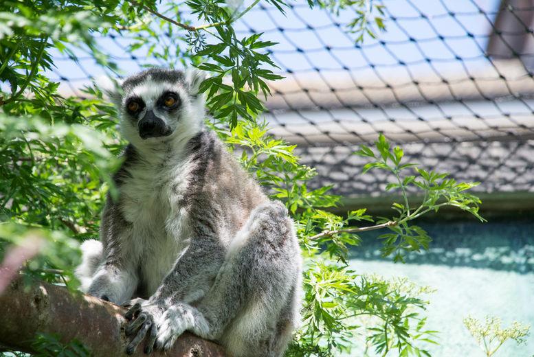Bristol Zoo Stock Image - Meerkat