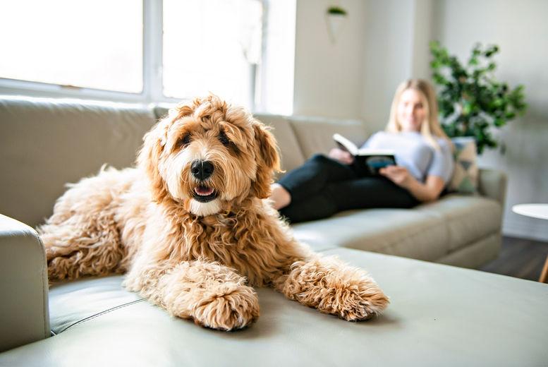 Online Dog Behaviour & Psychology Course