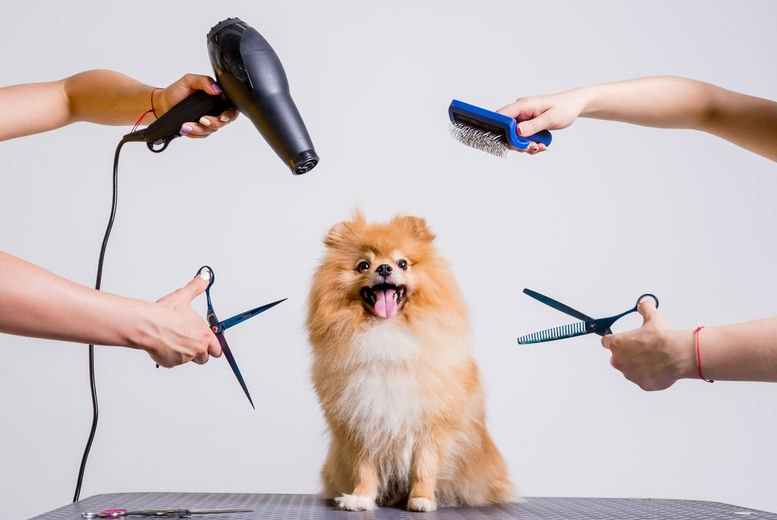 Online Dog Grooming, Bathing & First Aid Course