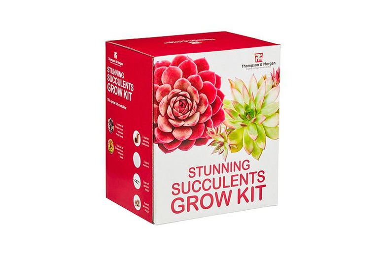 Branded-Garden-Products-Ltd-Stunning-Succulents-or-Bonsai-Acer-Growing-Kit-2