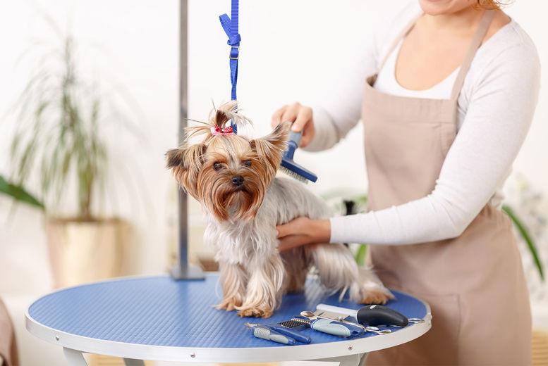 Online Animal Grooming Course Voucher