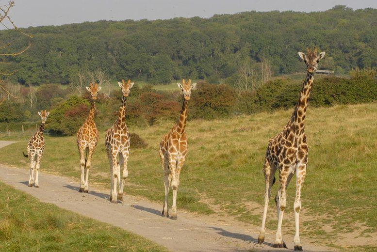 Mwezi & Kianga Giraffe Main Image