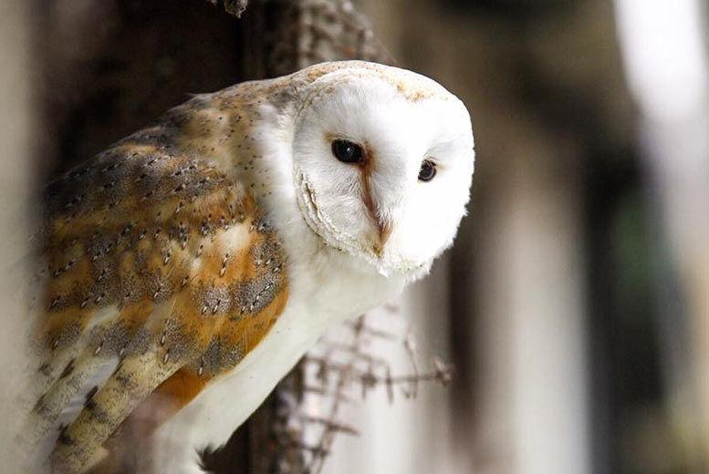 Shropshire Owl Experience