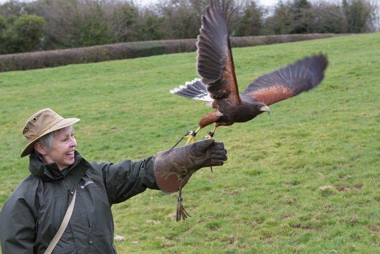 Hawk Walk Experience Voucher