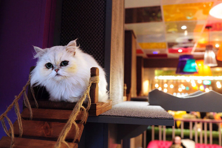 Kitty Café Afternoon Tea For 2 or 4 Voucher