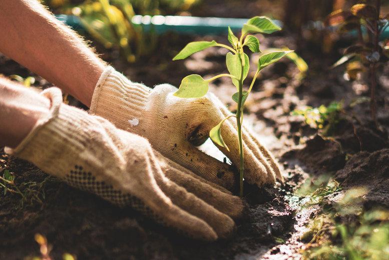 Horticulture Level 3 Diploma Online Course Voucher