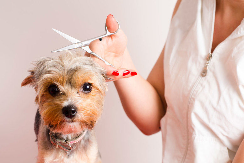Online Dog Grooming Diploma