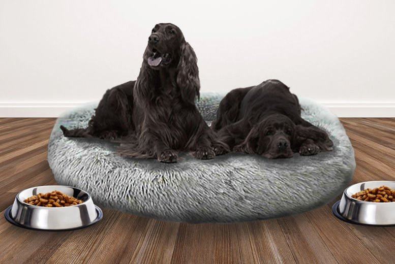 DOG_BED-LEAD