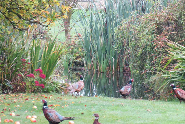 Feather Down Glamping-Pheasant