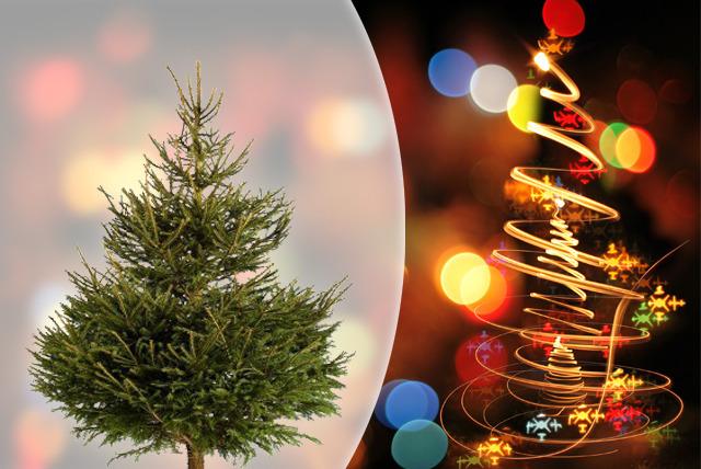 Real Christmas Tree | Edinburgh | Wowcher