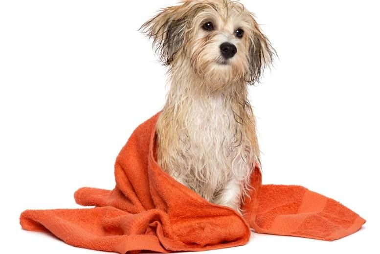 Dog Groom Cut Small Medium Or Large Long Haired Dogs