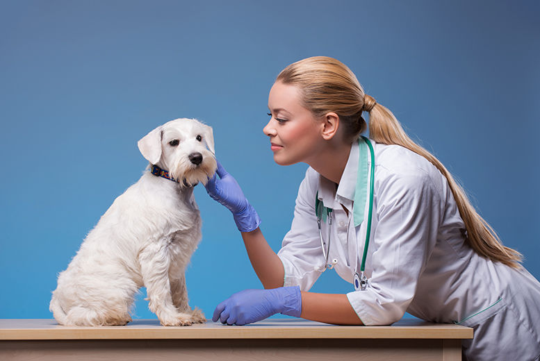 Veterinary Assistant Training Glasgow Wowcher