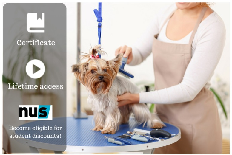 Dog Grooming Course Learning Deals In Cambridge Wowcher