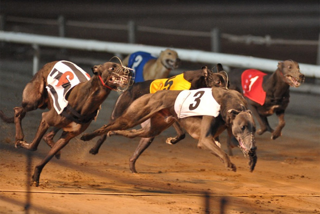 Greyhound Racing Race Card Drinks